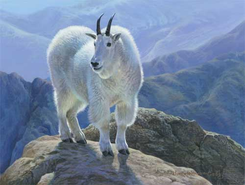 0035-Mountain-Goat.jpg