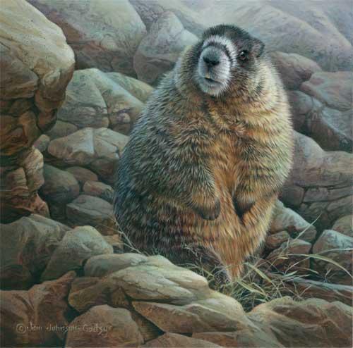0036-Yellow-Bellied-Marmot.jpg