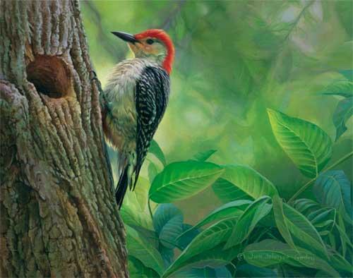 0050-woodpecker.jpg