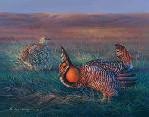 0062-prairie-chicken.jpg