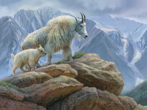 0075-mountain-goats.jpg