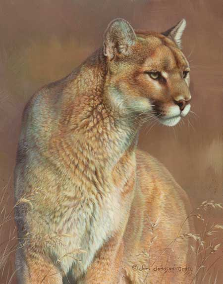 0086-cougar-mountain-lion.jpg