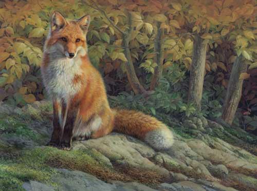 0092-Red-Fox.jpg