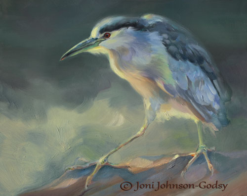 0098-Black-crowned-night-heron.jpg