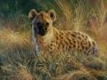 0021-Hyena.jpg