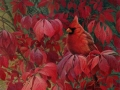 0038-Cardinal.jpg