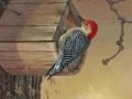 0039-red-bellied-woodpecker.jpg