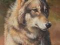 0047-gray-wolf.jpg