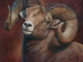 0063-big-horn-sheep.jpg