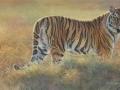 0064-siberian-tiger.jpg