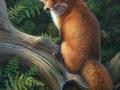 0073-red-fox.jpg