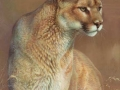 0086-cougar-mountain-lion.jpg