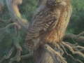0090-great-horned-owl.jpg