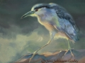 0098-Black-crowned-night-heron.jpg