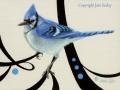 0102-Blue-Jay.jpg
