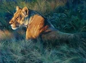 Lion wildlife art print