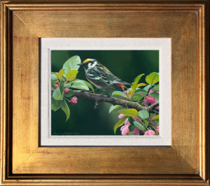 Warbler wildlife art print