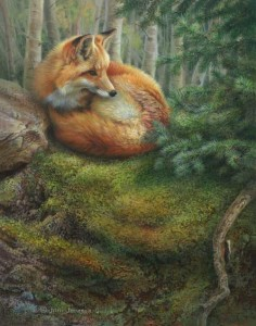 Red Fox Mossy Matress Wildlife Art Print